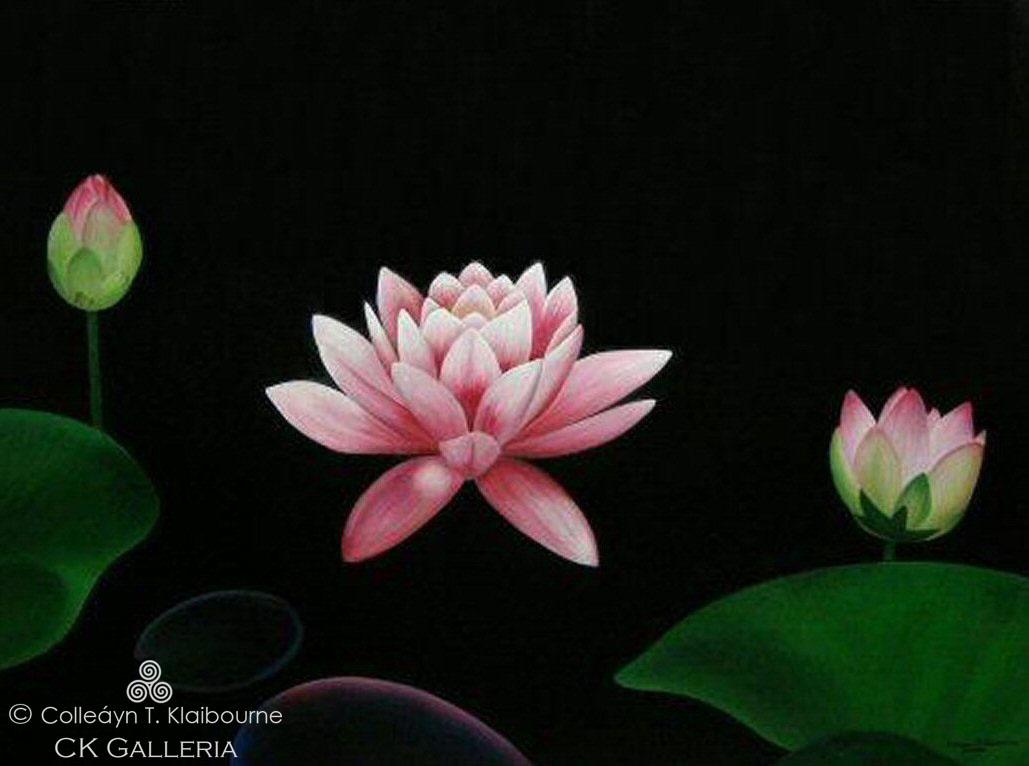 Lotus, Chunyi Lin