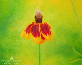 """Serenity"" Mexican Hatflower 20″ x 16″, Acrylic on Canvas"