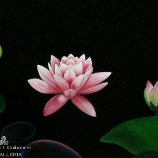3 Lotus Flowers